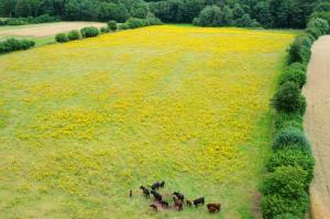 Bild - Positionspapier zum Umgang mit Jakobskreuzkraut in Schleswig-Holstein